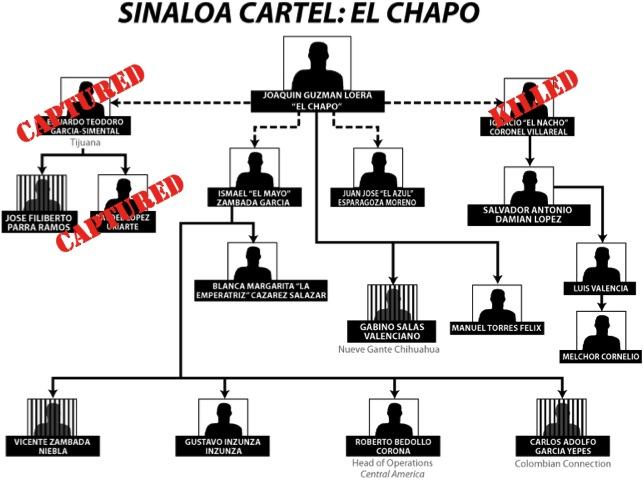 Sinaloa org chart